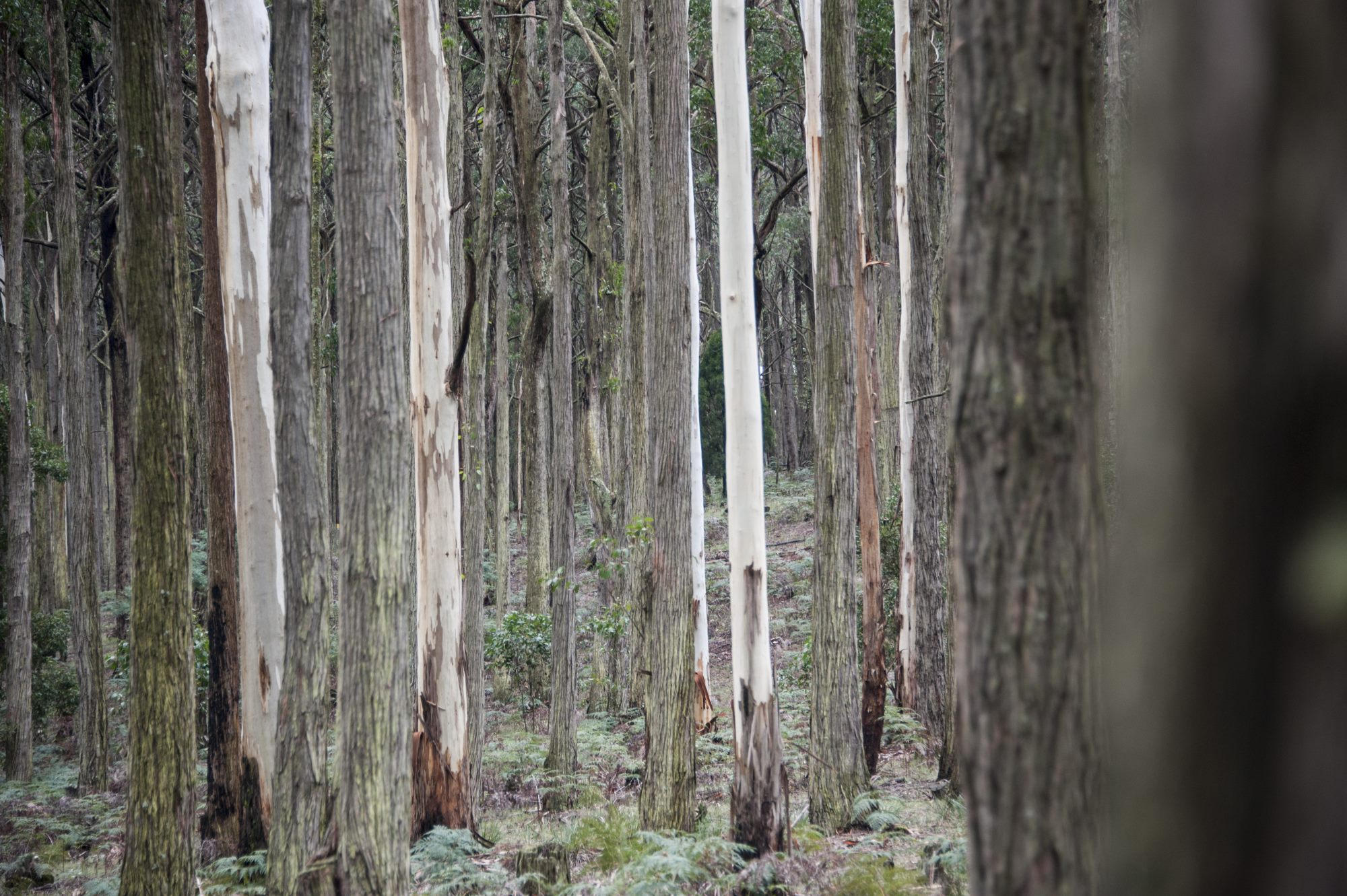 Wombat Forest