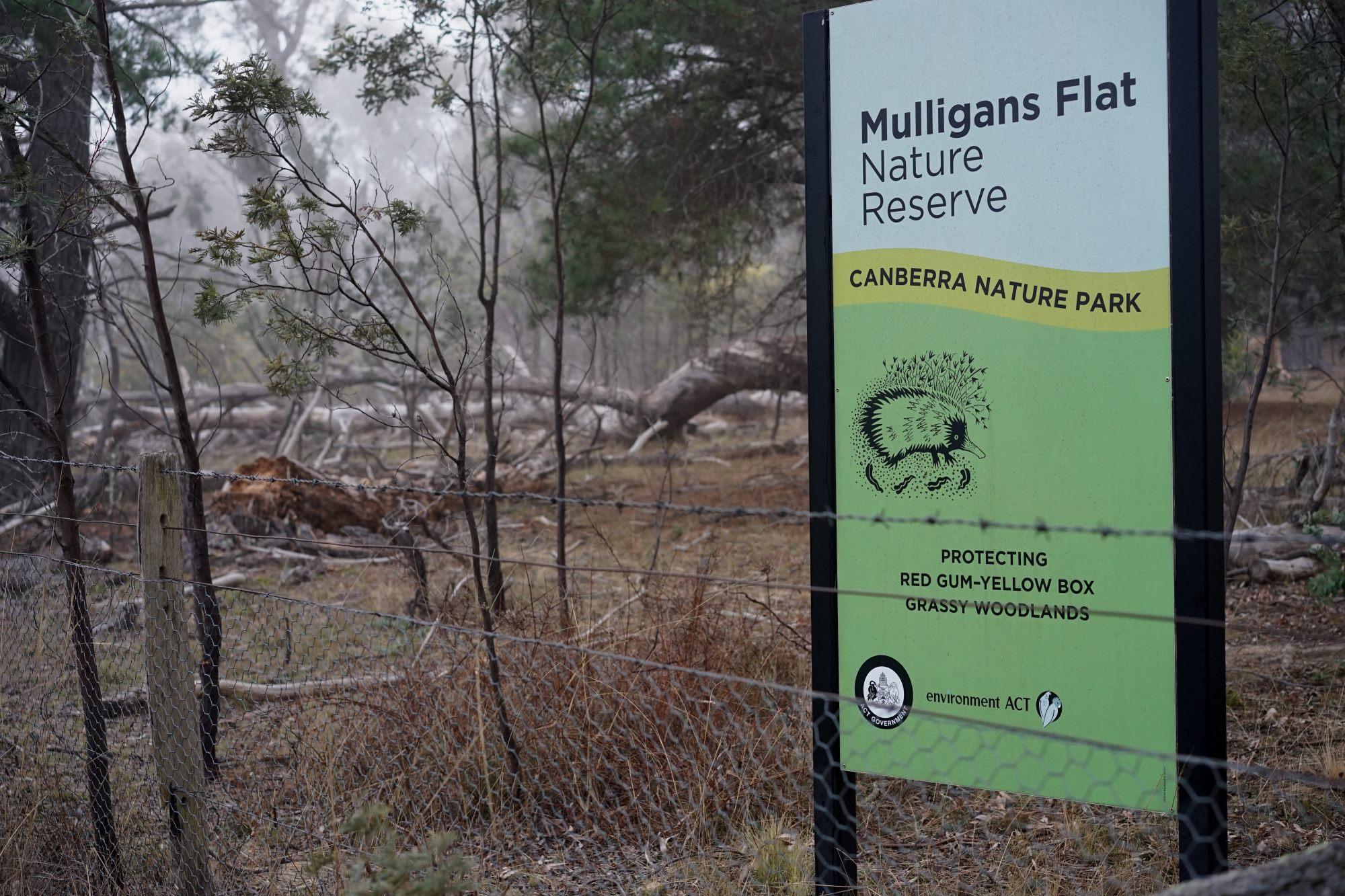 Mulligans Flat Nature Reserve