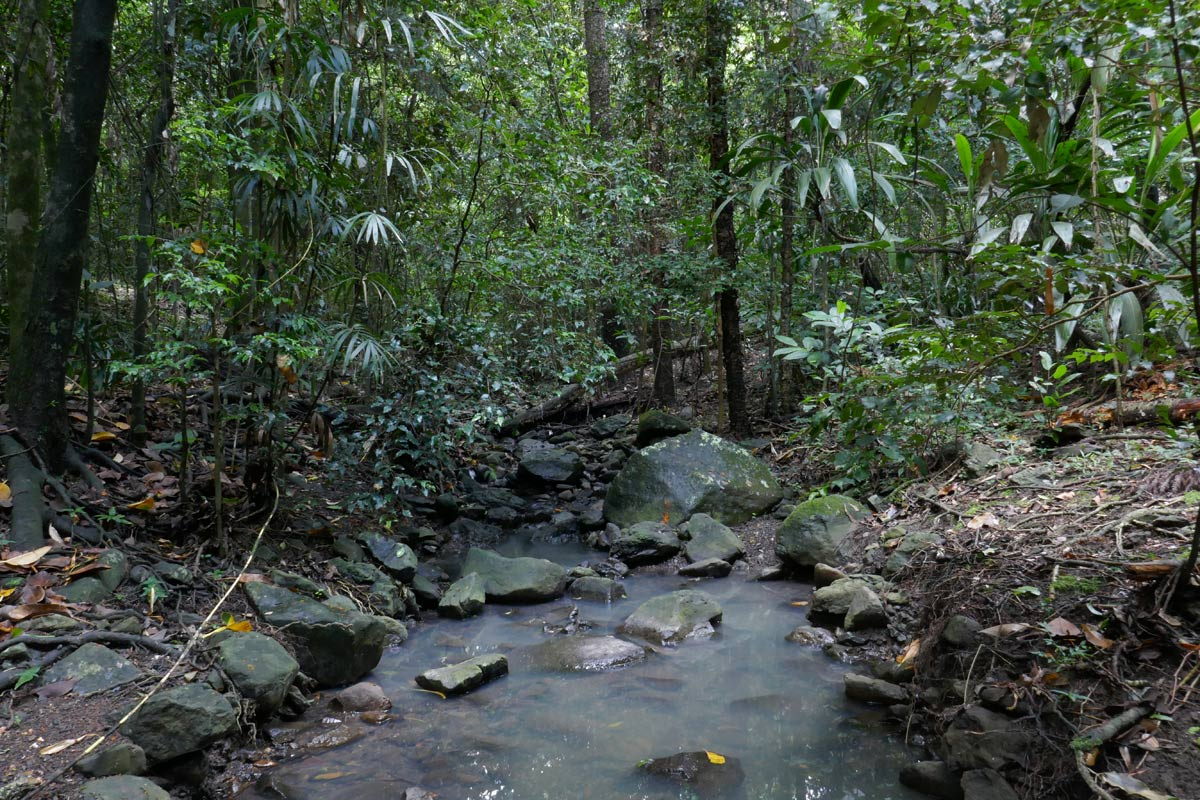 A creek in the rainforest reserve