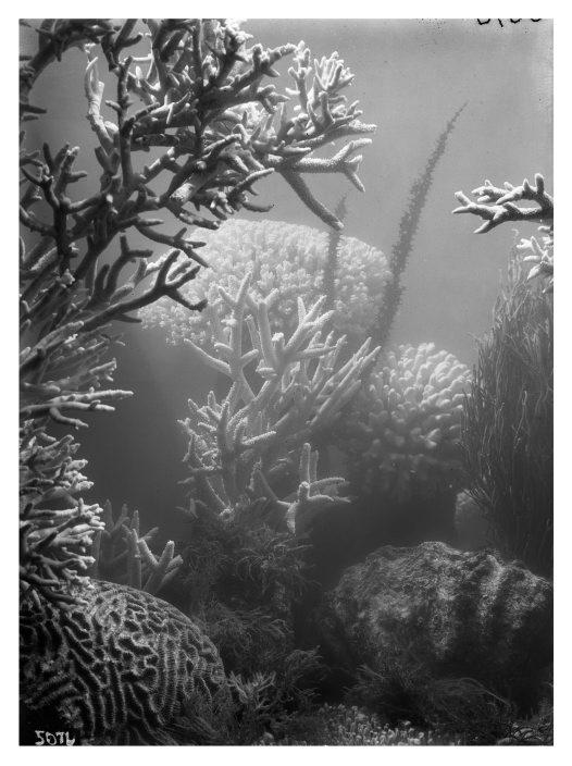 Frank Hurley underwater #5