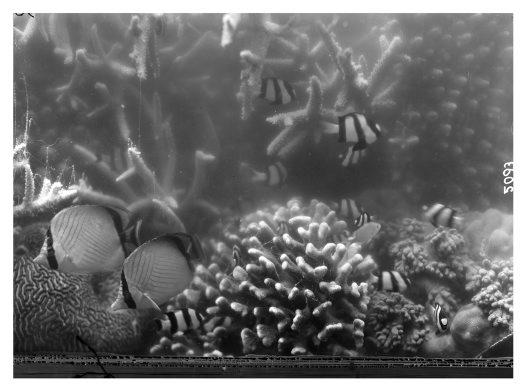 Frank Hurley underwater #6