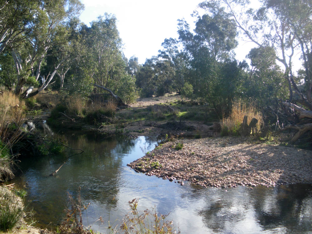 Susan's picnic spot on the Loddon River near Newstead. This landscape has been shaped by mining.