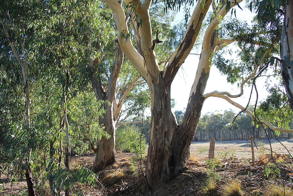 Dry creek on Blanche's parents' property near Bendigo, Victoria